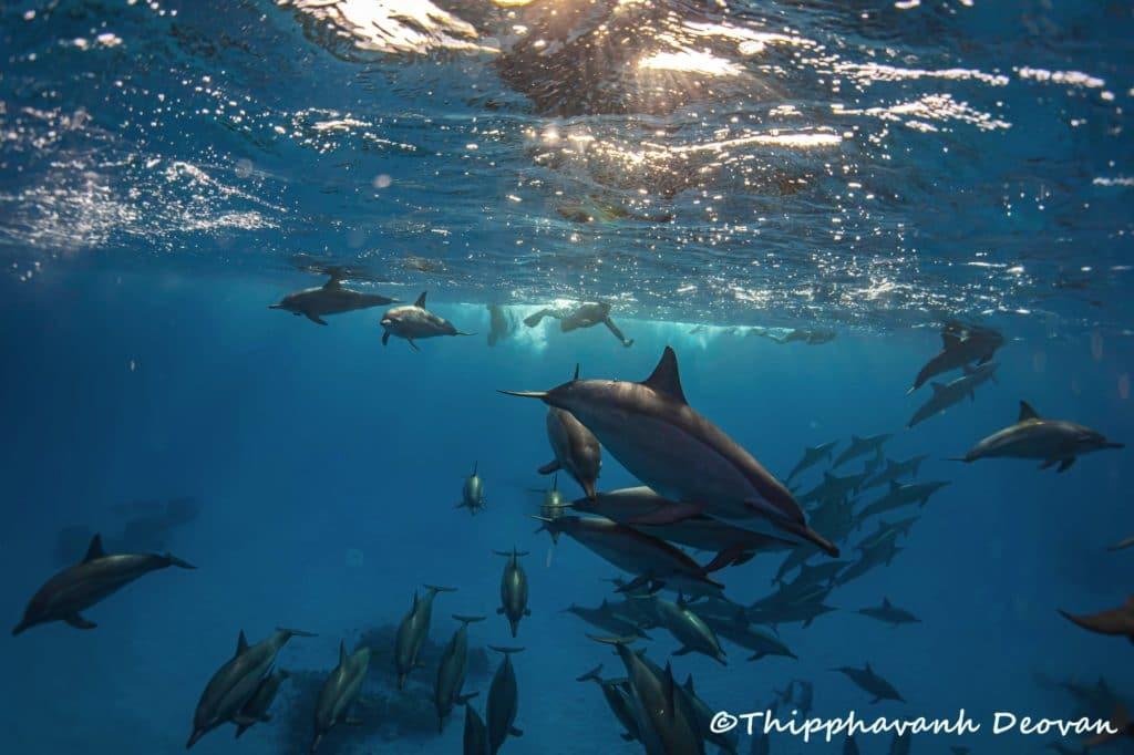 Retraite pour nager avec les dauphins libres - photo par Thipphavanh Deovan